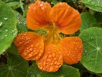 С дъждовни капчици; comments:5