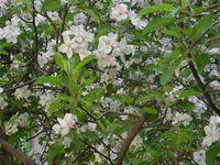 Ухание на пролет!; comments:10
