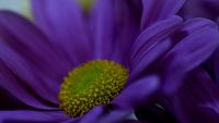 no name ( ID=2201362 ); comments:2