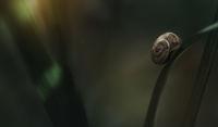 snail!; No comments
