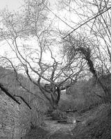 кладенецът и дървото; No comments