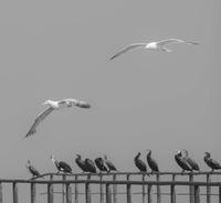 черно и бяло; Няма коментари