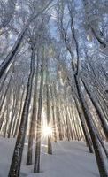 Зимните гори на Балкана; Коментари:2