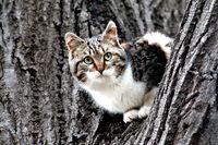 Коте на дърво; comments:8