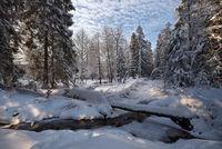 в зимнем лесу; comments:9