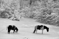 Черно и бяло...; comments:14
