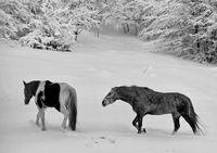 Черно и бяло; comments:6