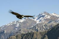 El Condor Pasa; comments:4