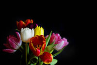 ...tulips addicted; comments:8