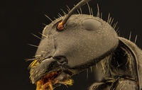 Мравка; comments:5