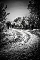 Пътя....; comments:1