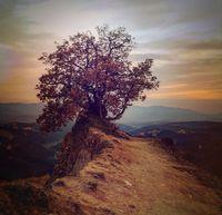 Самотното дърво на Роженските пирамиди/ 2019г.; comments:4