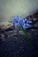 no name ( ID=2212356 ); comments:7