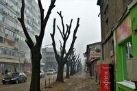 Улицата с окастрени дървета !; comments:6