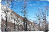 Планинско утро; comments:10