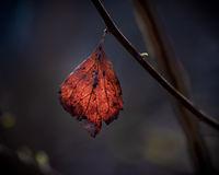 Есен/Пролет; comments:7