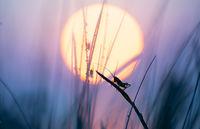 Good morning sunshine; comments:40
