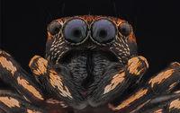 Скачащ паяк; comments:11