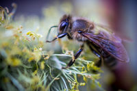 Едно от най-важните неща на планетата-Пчелите; comments:12