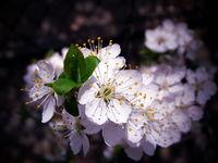 Пролетта дойде...; comments:10