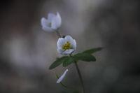 Първа пролет!; comments:6