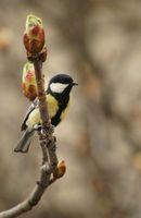 = Честита първа пролет! =; comments:7