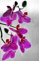 Не обичам орхидеи,но...; comments:7