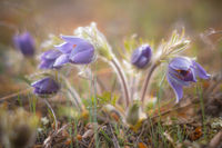 Пролетно...; comments:6