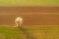 Пролетна утрин; comments:11