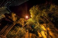 Градска джунгла; comments:10