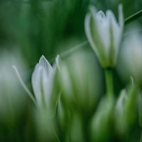 И ще сънуваме, че пак дошла е пролет...; comments:29