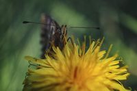 no name ( ID=2221159 ); comments:26