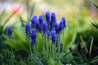 Пролет; comments:4