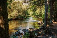Рекичка и гъсталаци, напролет; comments:9
