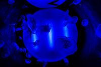 Когато светлината прегърне Медузите !; comments:1