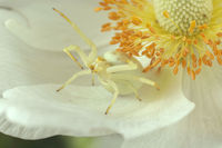 no name ( ID=2223137 ); comments:4
