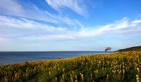 Животът край морето, видян през телефон; comments:9