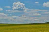 Рапично с облаци; comments:8