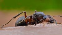 Мравка; No comments