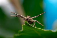 крабов паяк; comments:6