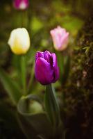 пролет; comments:3