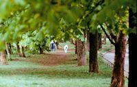 Разходка в парка; comments:1