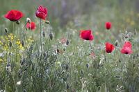 Пролетно настроение.; comments:9