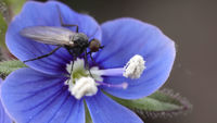 no name ( ID=2225081 ); comments:4