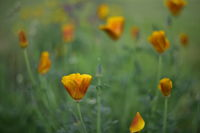 no name ( ID=2225124 ); comments:5