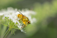no name ( ID=2225333 ); comments:4