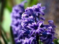 Синьо пролетно...; comments:10