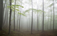 Скрита гора; comments:9