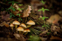 no name ( ID=2226160 ); comments:5