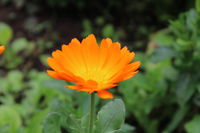 no name ( ID=2226212 ); comments:2